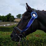 Hästarna fick fina välförtjänta rosetter.